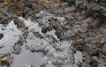 Загрязнение почв нефтью и нефтепродуктами: пдк, методы очистки