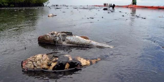 Ликвидация аварийных разливов нефти и нефтепродуктов